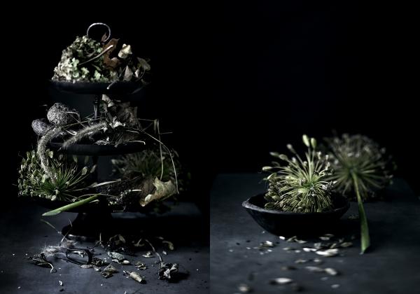 Dead plants Styling Monica Sjøli